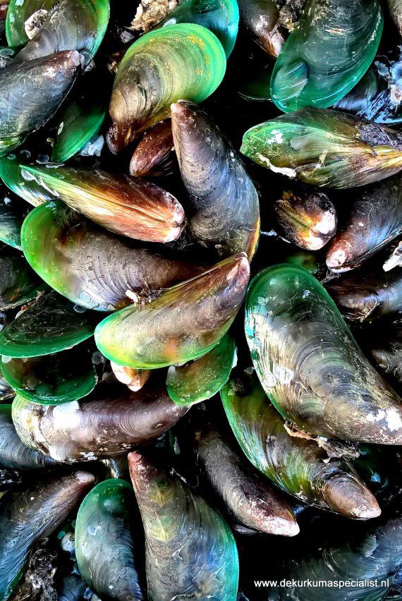 verse-groenlipmosselen-uit-nieuw-zeeland